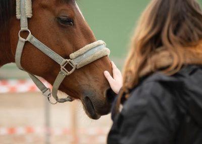 connexion au cheval
